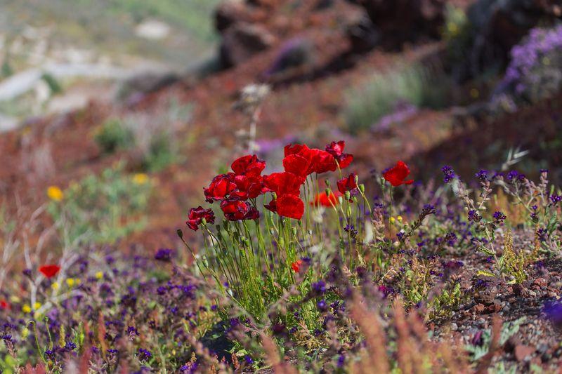 Яркие краски Санториниphoto preview