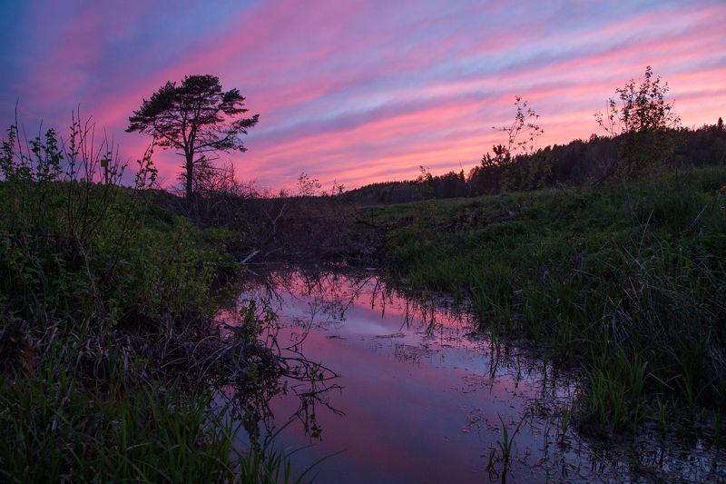 карелия, закат, болото Вечерняя Карелияphoto preview