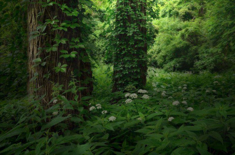 Под сенью дубового лесаphoto preview