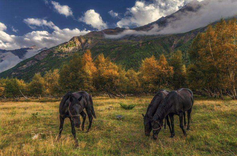 Pro кабардинских лошадейphoto preview