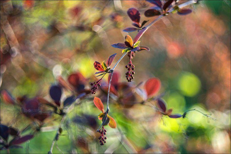 Привет из майского садаphoto preview