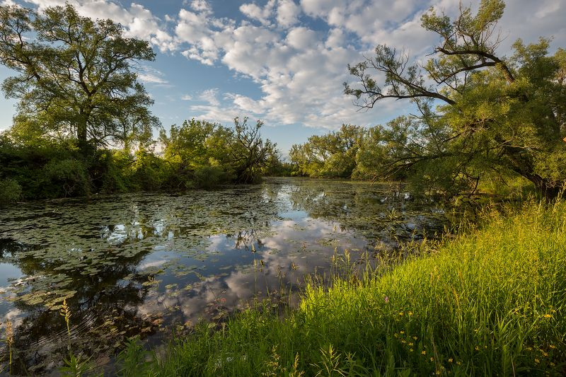 june,summer, river, clouds, evening, trees, water, reflection, июнь,лето, река, облака, вечер,деревья, вода,отражение Junephoto preview