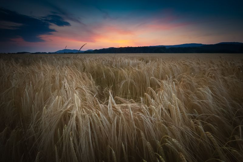 Heavy crops after sunset photo preview