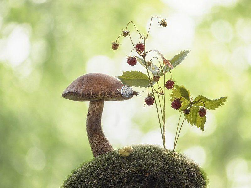 натюрморт, лето, растения, гриб, улитка, гусеница, земляника, мох Жил-был грибphoto preview