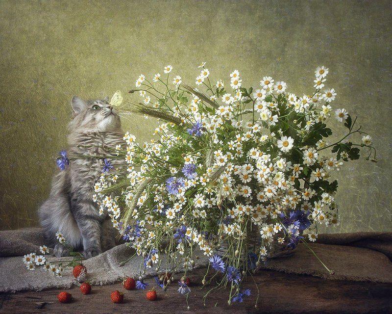 фото животных, кошка Масяня, домашние питомцы, цветочный натюрморт, лето, полевые цветы, бабочка, клубника Летний натюрморт с Масянейphoto preview