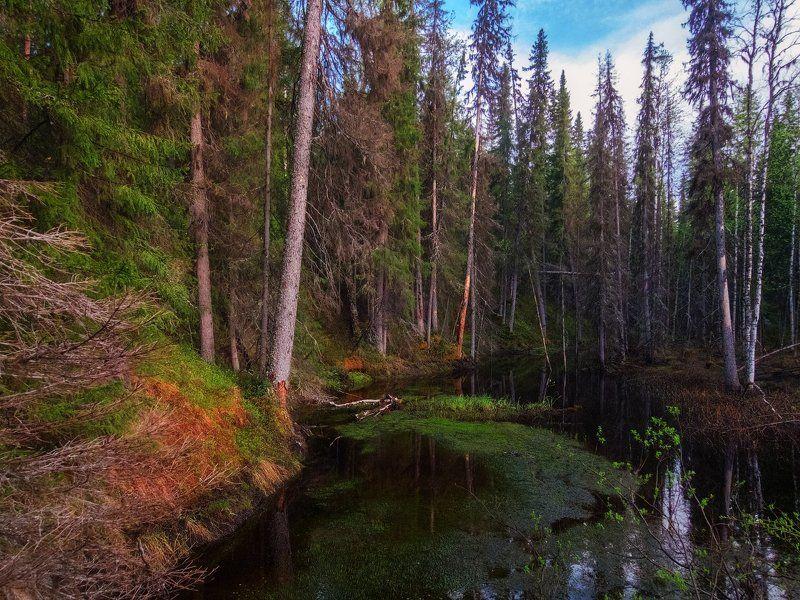 печора,коми,лес Дебри севераphoto preview