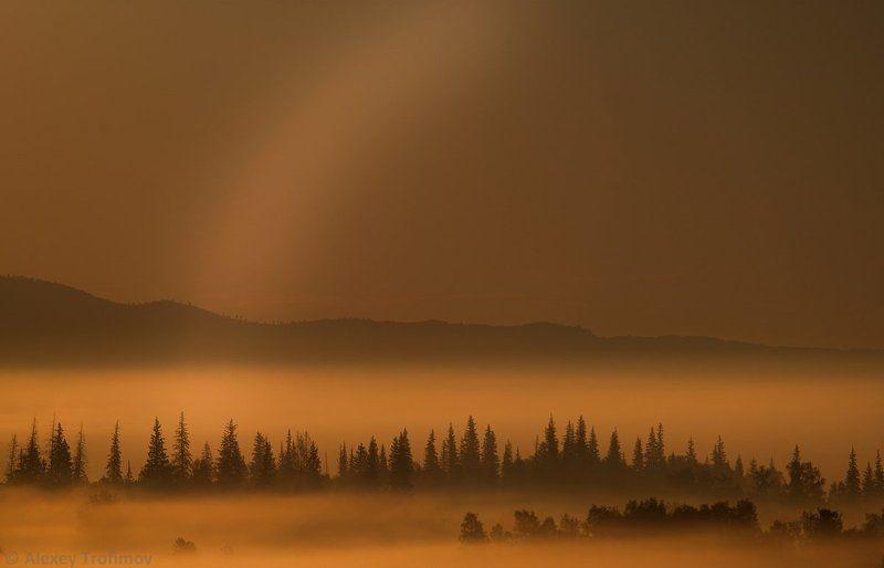 туман, тайга, рассвет Монохромная радугаphoto preview