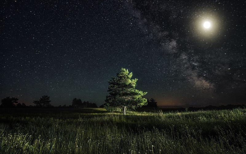 ночь, дерево, ночная съемка, млечный путь, луна, поле, лес, сосна, елка, одинокое, трава, свет, звезды Другие мирыphoto preview