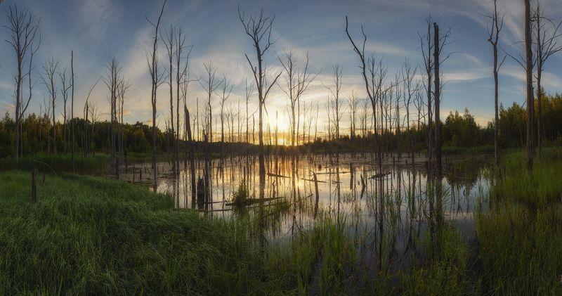 тула, суворов, мертвое озеро Утро на мертвом озереphoto preview