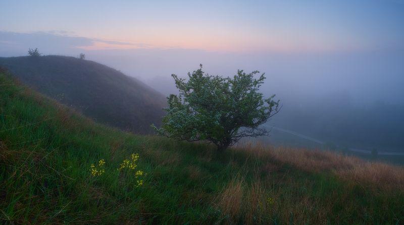 утро, туман, панорама, долина, река, рассвет, весна, май, дерево, morning, tree, fog, spring, sunrice, panorama утопая в тумане ..photo preview
