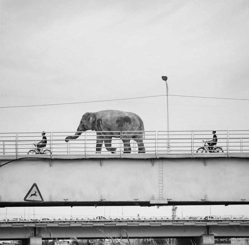 #cross#breeding #animal #animal_editing #animal_fine_art, #animal_flat, #animal_photo, #animal_photography, #animal_surreal,#bear, #bird, #birds, #black, #black_and_white Wild Animal Crossingphoto preview
