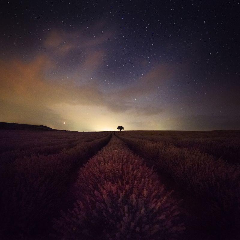 лаванда спокойные ночиphoto preview