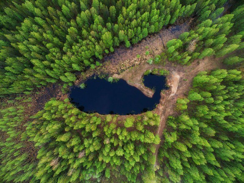 печора,коми,лес,свысока,квадрокоптер Лесной китphoto preview