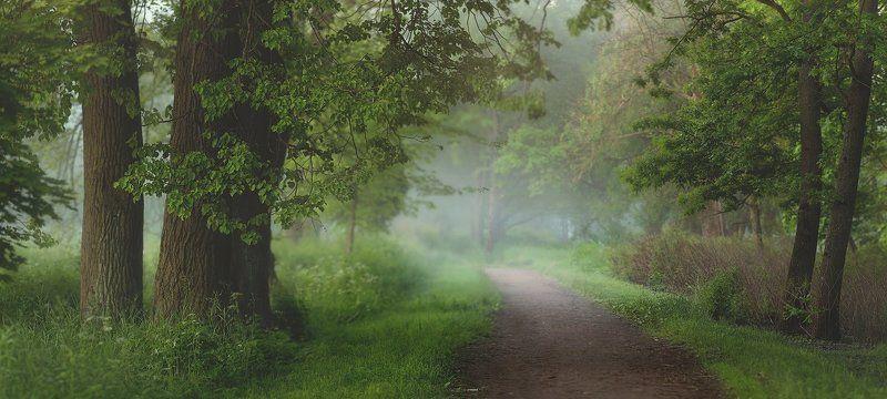 питер, лето, пушкин, царское, царское село, туман, царское Медитация - утро. . .photo preview