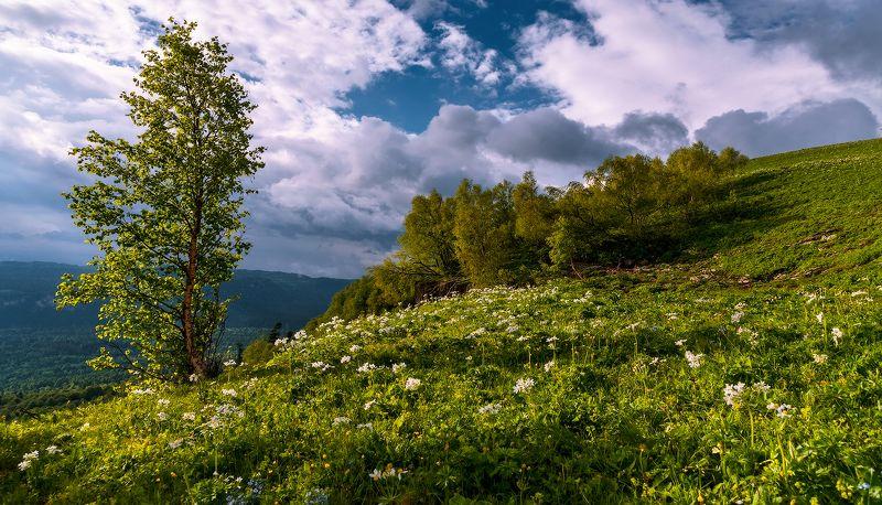 Начало лета на Мезмайской котловинойphoto preview