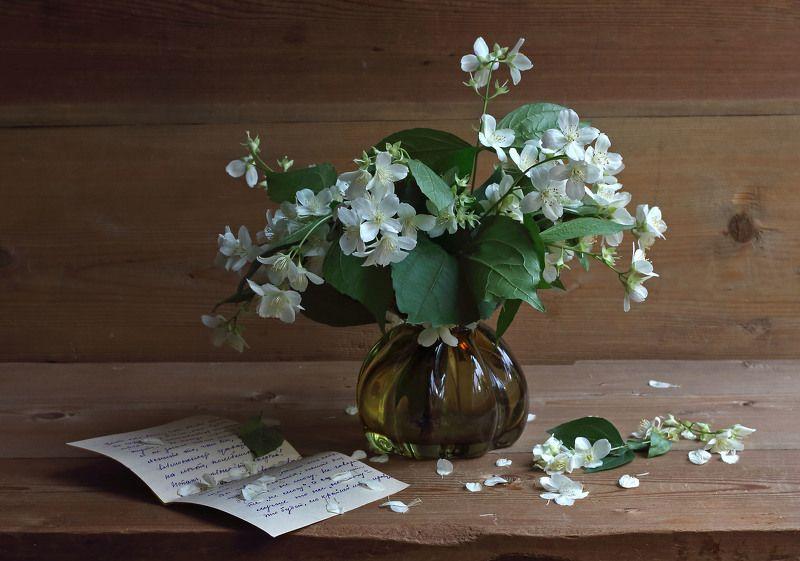 жасмин, ваза, письмо Конец июняphoto preview