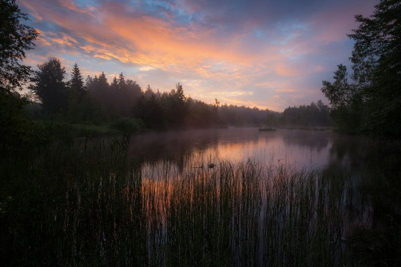 лето, утро, озеро, лес, благодать, беларусь Начало прекрасного дняphoto preview