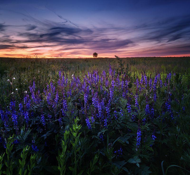 закат пейзаж небо цветы краски Июльский Вечерphoto preview