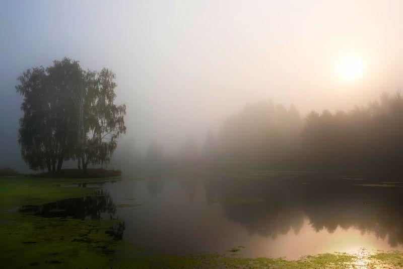 утро, подмосковье, речка, черная Летнее утроphoto preview