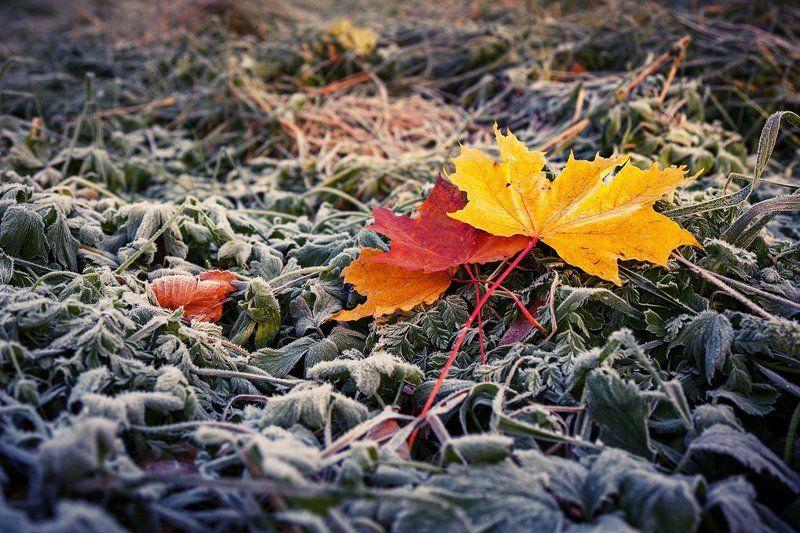 Осень. Листья. Напоминание об осени.photo preview