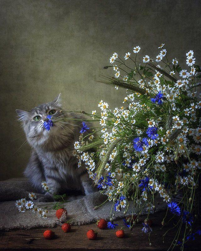 фото, домашние животные, цветочный натюрморт, лето, кошка Масяня, клубника Васильки пахнут полемphoto preview