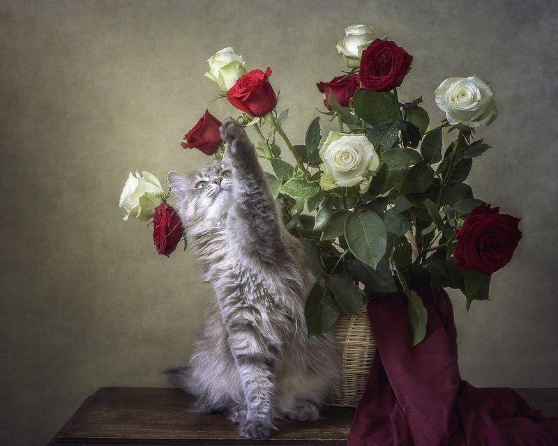 фото, домашние животные, кошки, кошка Масяня, цветочный натюрморт, розы, корзина Хочу вон тот цветок!photo preview