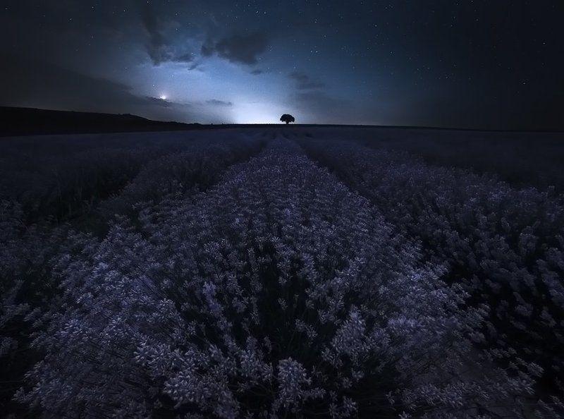 Silent lavender nightphoto preview