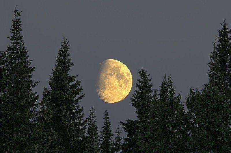 печора,коми,север,белые,ночи,луна Лесная гостьяphoto preview