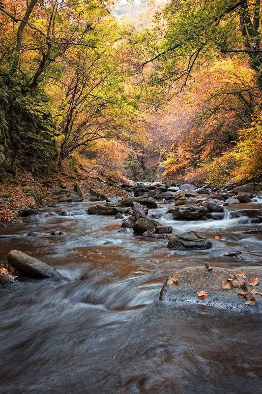 Осень  нашептывает свою песню....photo preview