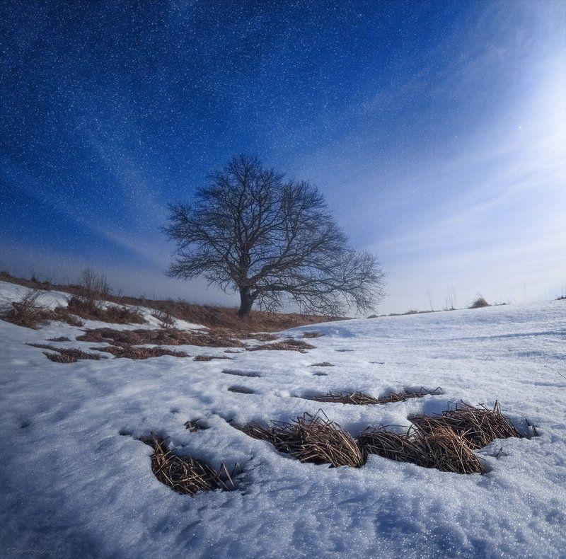 Лунная соната для одинокого дерева.photo preview
