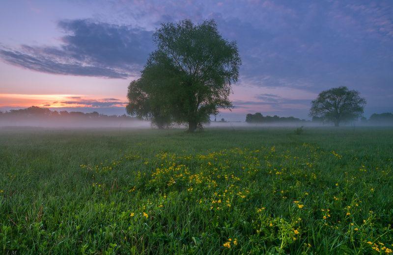 рассвет, утро, весна, луг, травы, дерево, туман, morning, fog, spring, sunrise поэтичный рассветphoto preview