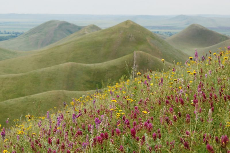 горы долгие Цветущие степиphoto preview