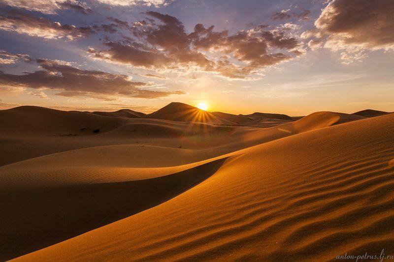 пустыня, гоби, закат Золото пустыниphoto preview