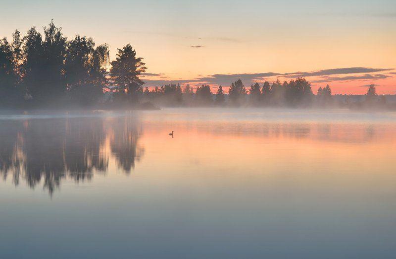 после заката, туман, чомга, озеро, отражение, тишина, июль Затишье после дождяphoto preview