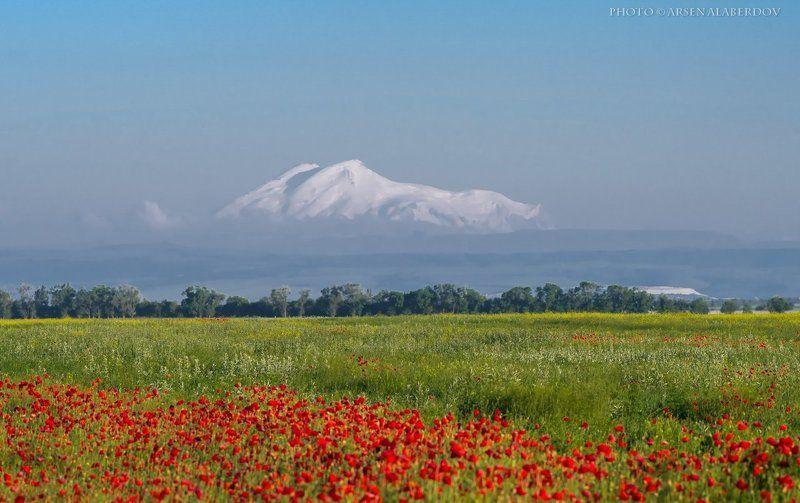 горы, предгорья, маки, эльбрус,хребет, вершины, пики, восход, солнечный свет, скалы, холмы, долина, облака, путешествия, туризм, карачаево-черкесия, кабардино-балкария, северный кавказз , закат, свет, лучи ЭЛЬБРУС И МАКИphoto preview