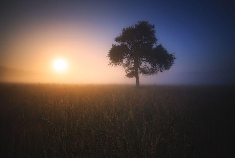 fog, mist, moonrise, tree Moorise and the field of mistphoto preview