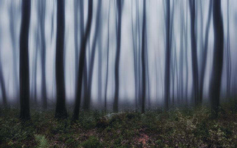 Мистический вечер в туманном лесу...photo preview