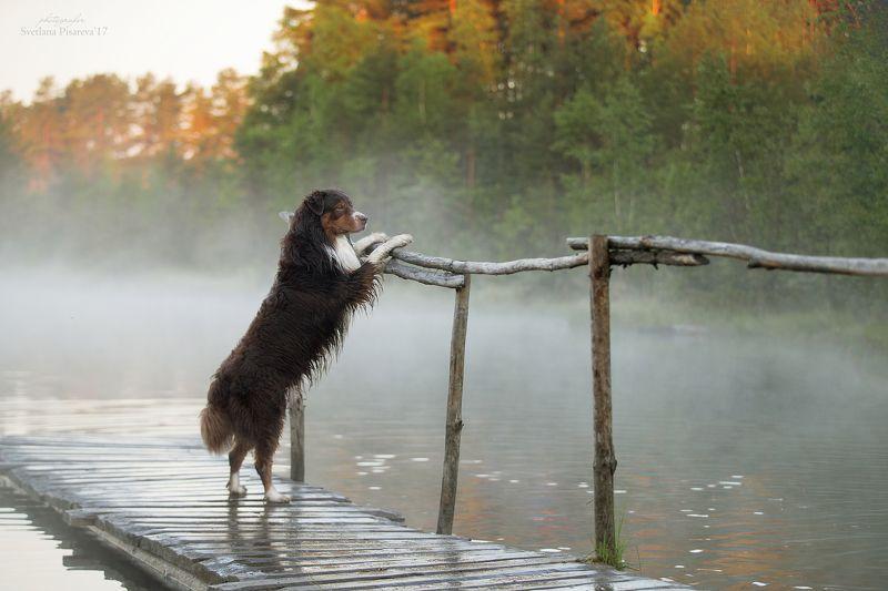 Туманное утро...photo preview