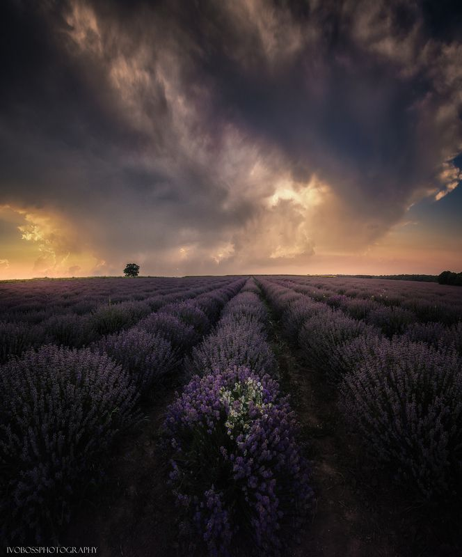 Sunset in the Bulgarian lavender fieldsphoto preview