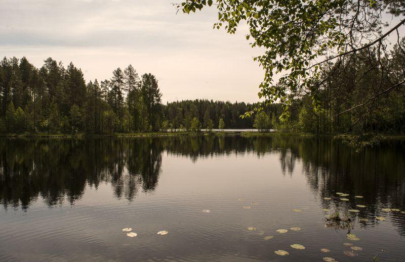У лесного озера.photo preview