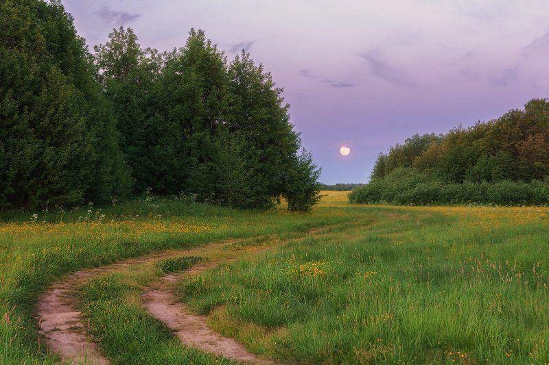 печора,коми,север,белые,ночи По дороге белых ночейphoto preview