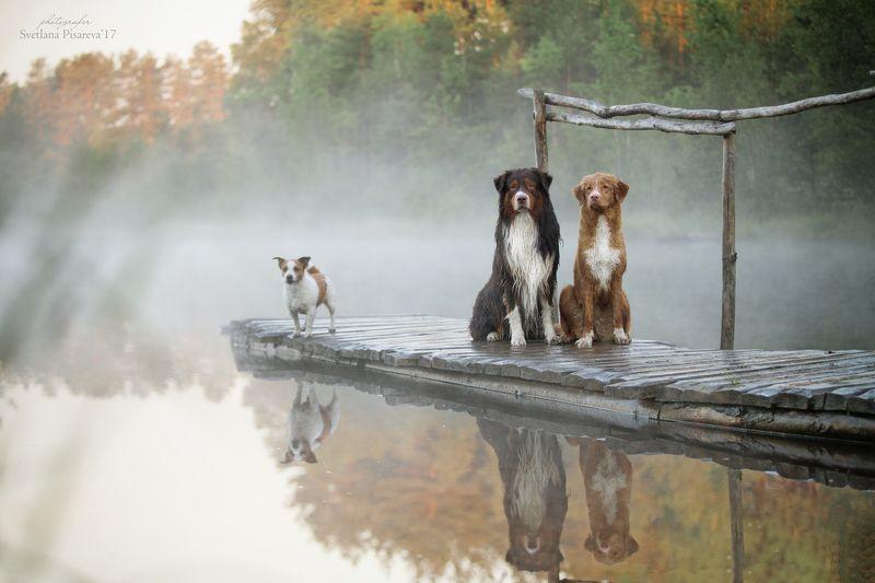 Туман на озере..photo preview