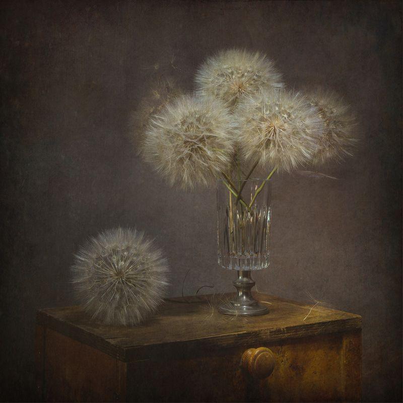 dandelion - still lifephoto preview