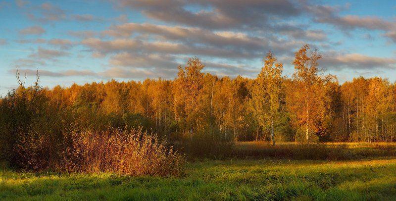 питер, осень, пушкин, царское, царское село, пейзаж Скоро осень. . .photo preview