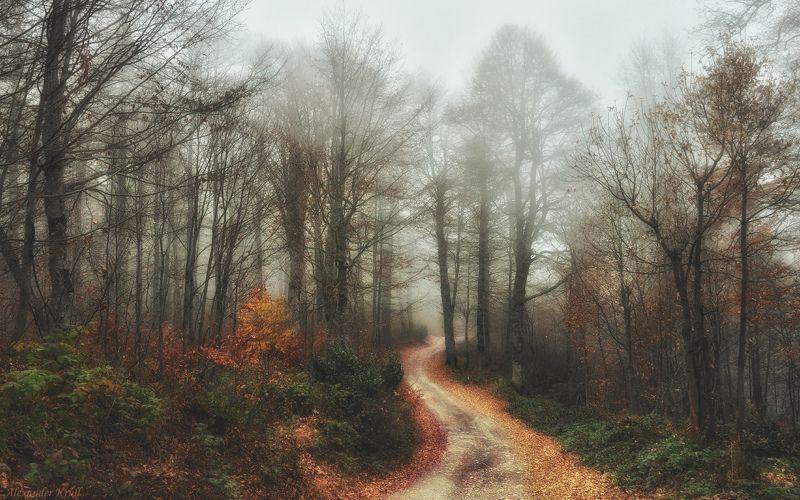 Лег туман на ноябрьский лес...photo preview