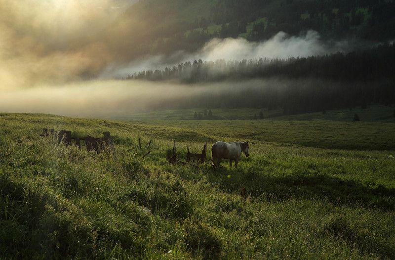 Altai Mt.photo preview