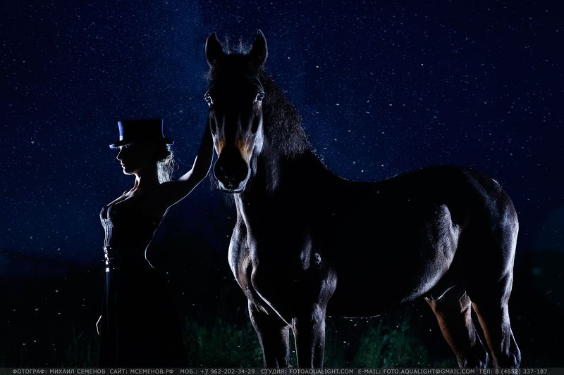 horse Silent nightphoto preview
