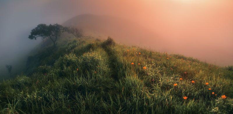 панорама, утро, туман Сказки туманного утраphoto preview