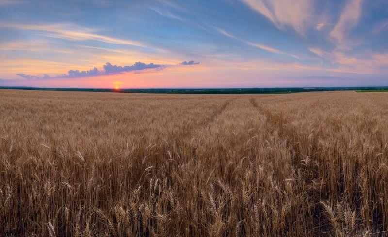 clouds, evening, panorama, Summer, sunset, wheat, вечер, закат, лето, небо, панорама, поле, пшеница, field вечер в полях ..photo preview