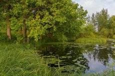 Пейзаж с озером и дубами на берегу